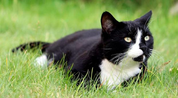 A new study suggests household cats can respond to the sound of their own names. (Stock photo)