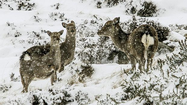 Oh deer, it's cold: A small herd brave a blizzard in the Wicklow Gap. Photo: Garry O'Neill