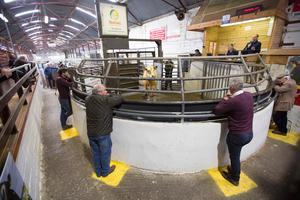 Toeing the line: These farmers were spot on in their adherance to Covid-19 social distancing guidelines for last Saturday's sale at Mohill Mart, Co Leitrim. Photo Brian Farrell