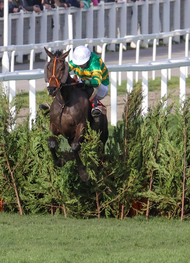 EASY DOES IT: Easyland ridden by Jonathan Plouganou winning at Cheltenham in March. Pic: racingpost.com
