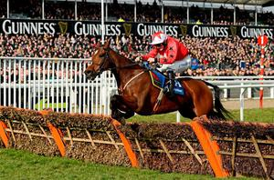 The New One, with Sam Twiston-Davies up, will be a leading contender in today's Stan James Champion Hurdle