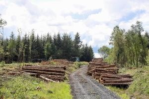 Stumped: Forestry development is at a standstill nationwide as objections block the planting and harvesting of coniferous plantations. Picture: Alf Harvey.