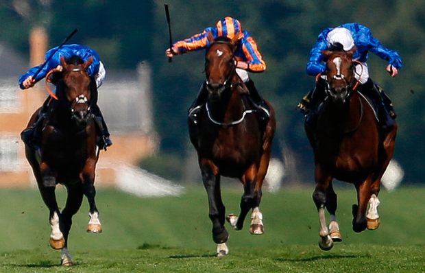 Barney Roy (white cap), with James Doyle up, on the way to winning the St James's Palace Stakes at Ascot. Photo: Getty Images