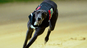 Broadstrand Bono returned to action in the opening round of the Laurels and gave warning that he could be a big player with a professional display of front running (stock photo)