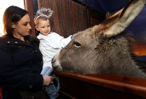 Four year old Riley Byrne from St Josephs Dublin 8 gets to meet the donkey, at the opening of the IFA live animal crib at the Mansion house in Dublin.