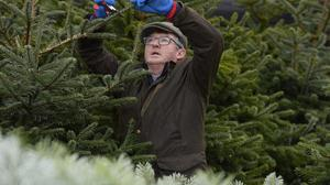 In trim: Patrick Finnegan works on one of his trees