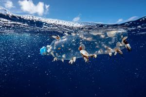 Pollution problem: This photo from Greenpeace shows a plastic bottle floating in the oceans, on which bryozoans, nudibranchs, crabs, and barnacles, are living. Photo: Justin Hofman/Greenpeace/PA