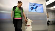Alert: Sniffer dog ET, one of a team being trained to detect Covid-19 from arriving passengers' samples, sits with his trainer Anette Kare at Helsinki Airport in Finland. Photo: Lehtikuva/via REUTERS