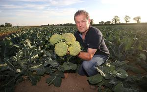 Paul Brophy, IFA chairman of horticulture and head of Brophy Produce. Photo: Damien Eagers.
