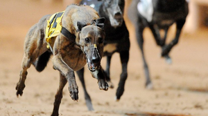 Picking a winner is no easy task but all evidence suggests the track will be running on the fast side and it could favour the front runners (stock photo)