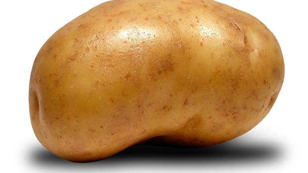"""Patrick Kavanagh was gloomy about potatoes in The Great Hunger where the peasant is tied to his few acres and """"the cows and horses breed/And the potato seed/Gives a bud and roots and rots"""" (Stock picture)"""