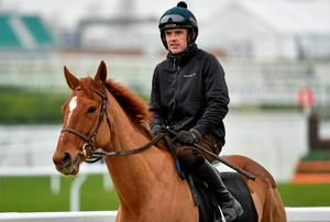Ruby Walsh and Annie Power on the gallops ahead of today's OLBG Mares Hurdle. Photo: Matt Browne / SPORTSFILE