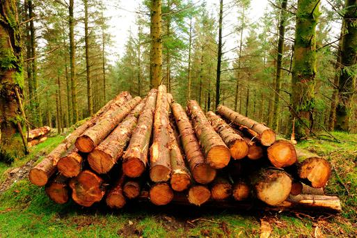 The Forestry Act came into force in May