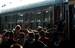 Migrants storm into a train at the Keleti train station in Budapest, Hungary, September 3, 2015 as Hungarian police withdrew from the gates after two days of blocking their entry.         REUTERS/Bernadett Szabo