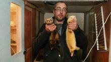 Gary Dowley with two of the ferrets which he breeds at his home in Carrick on Suir Co Tipperary.