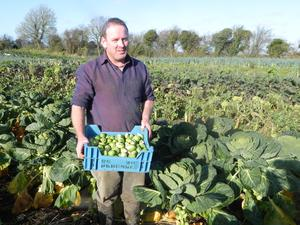 Green approach: Padraig Fahy harvesting Brussel sprouts at Beechlawn organic farm