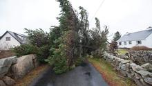A tree blocking a road in the west of the country