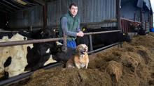 Balancing act: Padraic Harnan with his dog Bruno and some of the livestock on the family farm near Dunboyne, Co Meath. Photo: Frank McGrath