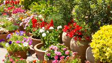 Pots and containers are the ideal entry point to gardening