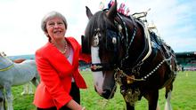 British Prime Minister Theresa May with a prize-winning shire horse named Tumble at the Royal Welsh Agricultural Show. Photo: PA