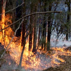 A firefighter manages a controlled burn near Tomerong, Australia, Wednesday, Jan. 8, 2020, set in an effort to contain a larger fire nearby. (AP Photo/Rick Rycroft)