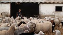 Cheap for some: Lamb can cost €30 for a shoulder in a supermarket – but the farmer may only be paid €90 for the entire animal