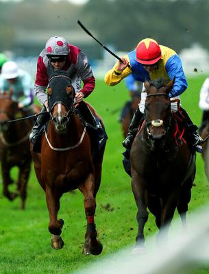 Gordon Lord Byron (right), which is expected to go off around 8/1, ticks the right boxes and is my idea of a value bet today