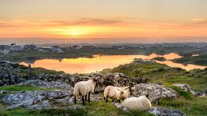 A sunset over Connemara, between Clifden and Roundstone.