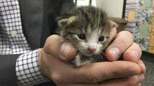 The kitten was unharmed when rescued Credit:PA