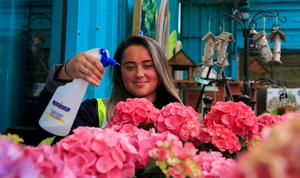 Emer Kennedy gets ready for the reopening of Newlands Home and Garden Centre in Clondalkin, Dublin, today as the first businesses begin to come out of Covid-19 lockdown. Photo: Gareth Chaney, Collins