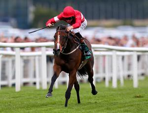 Tiggy Wiggy is a shoe in for this afternoon's Connolly's Red Mill Chevely Stakes at Newbury.  Ben Hoskins/Getty Images