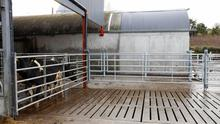 Newly installed cattle crush system. Photo: Alf Harvey.