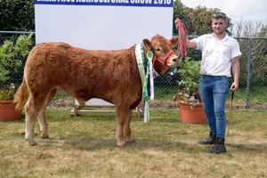 Mike Collins of Carbery Farm Rosscarbery Co Cork with Carbery Mercury the overall Limousin champion of Barryroe Agriculture Show. Picture Denis Boyle