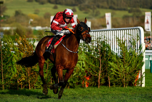 STILL GAME: Tiger Roll and Keith Donoghue on the way to finishing second in the Glenfarclas Chase at Cheltenham. Photo by Harry Murphy/Sportsfile