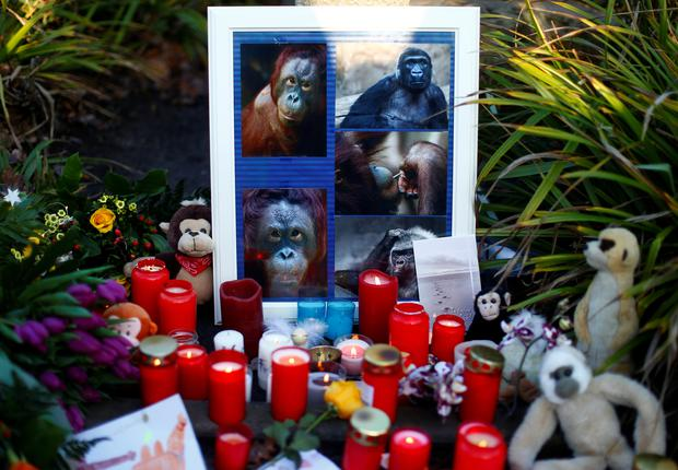Candles and flowers are pictured outside the zoo of Krefeld after a monkey house burned down in Krefeld, Germany, January 1, 2020. REUTERS/Thilo Schmuelgen