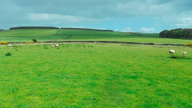The lands for sale near Ashford, Co Wicklow were originally developed as a model sheep and cattle farm