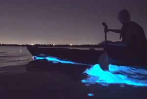 """Aoife McGuill was """"stunned and amazed"""" by the bioluminescence while kayaking with Atlantic Sea Kayaking in West Cork."""
