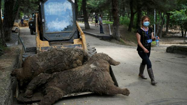 A zoo keeper walks past dead bears at the zoo in Tbilisi, Georgia, June 17, 2015. Tigers, lions, bears and wolves were among more than 30 animals that escaped from a Georgian zoo and onto the streets of the capital Tbilisi on Sunday during floods that killed at least 12 people. REUTERS/David Mdzinarishvili      TPX IMAGES OF THE DAY