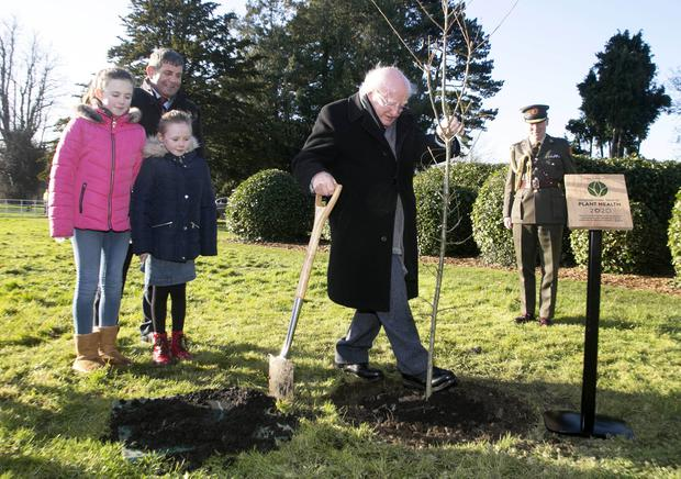 Green dream: Michael D Higgins plants a tree in the Phoenix Park to launch the International Year of Plant Health, with Molly and Rhona Keenan and Andrew Doyle. Photo: Colm Mahady, Fennells