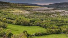 The value of agricultural land given over to native woodlands is reduced to about €800 per acre - compared to €4,000 per acre for conifer plantations.