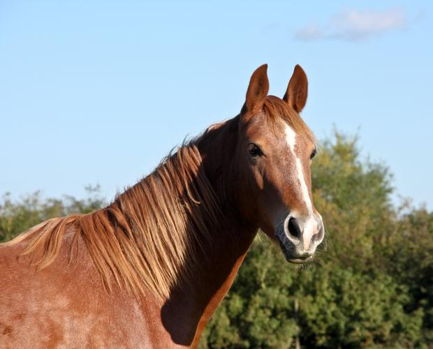 Stock image of a horse