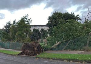 A fallen tree in Cabinteely, County Dublin as Storm Ellen hit Ireland  Photo credit: Lawrence Hill/Twitter/PA Wire