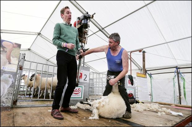 Sheep shearer George Grahan showing Ryan Tubridy his craft at the National Ploughing Championships in Fenadh Co Carlow. Picture: David Conachy
