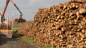 Falling timber: Supplies from homegrown sources are dwindling quickly and pushing up demand for expensive imports