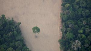 FILE PHOTO: An aerial view shows a deforested plot of the Amazon near Porto Velho, Rondonia State, Brazil August 21, 2019. Picture taken August 21, 2019. REUTERS/Ueslei Marcelino/File Photo