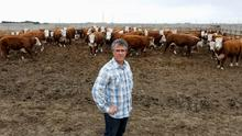 Rancher Ryan Kasko with his beef cattle, which are affected by a supply chain blockage caused by coronavirus disease (COVID-19) outbreaks at meat-packing plants, in Coaldale, Alberta, Canada May 6, 2020. Picture taken May 6, 2020.  REUTERS/Todd Korol