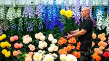 Garden in your living room: The finishing touches are applied to begonias and delphiniums during preparations for last year's RHS Chelsea Flower Show. There will be daily events and tours online after this year's event was cancelled. Photo: Victoria Jones/PA Wire