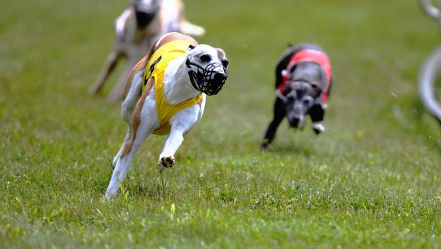 Six Irish-trained runners will compete in the William Hill English Derby