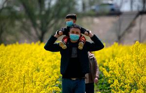 People wearing face masks walk through a rapeseed farm used to produce canola oil in Chinas central Jiangxi province. It borders Hubei province, the epicentre of the country's COVID-19 outbreak. Photo: Noel Celis / AFP