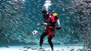 A diver wearing a South Korean soccer fan uniform performs with sardines during an event to promote the upcoming 2014 Brazil World Cup, at the COEX Aquarium in Seoul, South Korea, Monday, June 9, 2014. South Korea will face Russia, Belgium and Algeria in 2014 Brazil World Cup. (AP Photo/Ahn Young-joon)